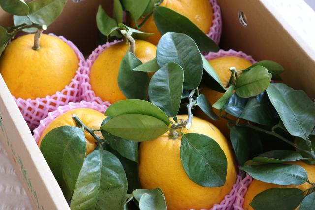 河内晩柑-包茎手術、治療なら愛媛県のクリニック